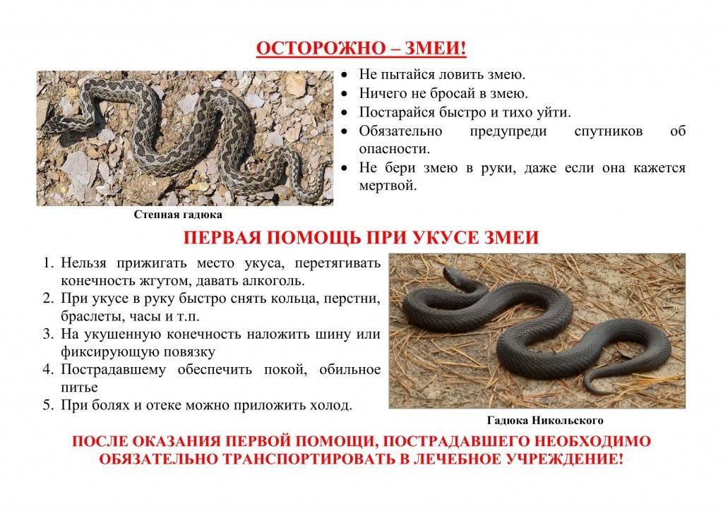 Укус змеи: симптомы, первая помощь, лечение, фото