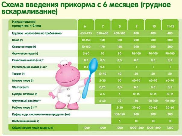 Кушать подано или что надо знать родителям о введении прикорма. схема и правила введения прикорма по месяцам