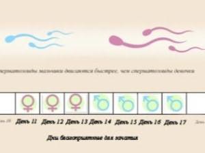 Благоприятные дни для зачатия – когда лучше зачать ребенка, как рассчитать время после месячных, какой день цикла выбрать, овуляция