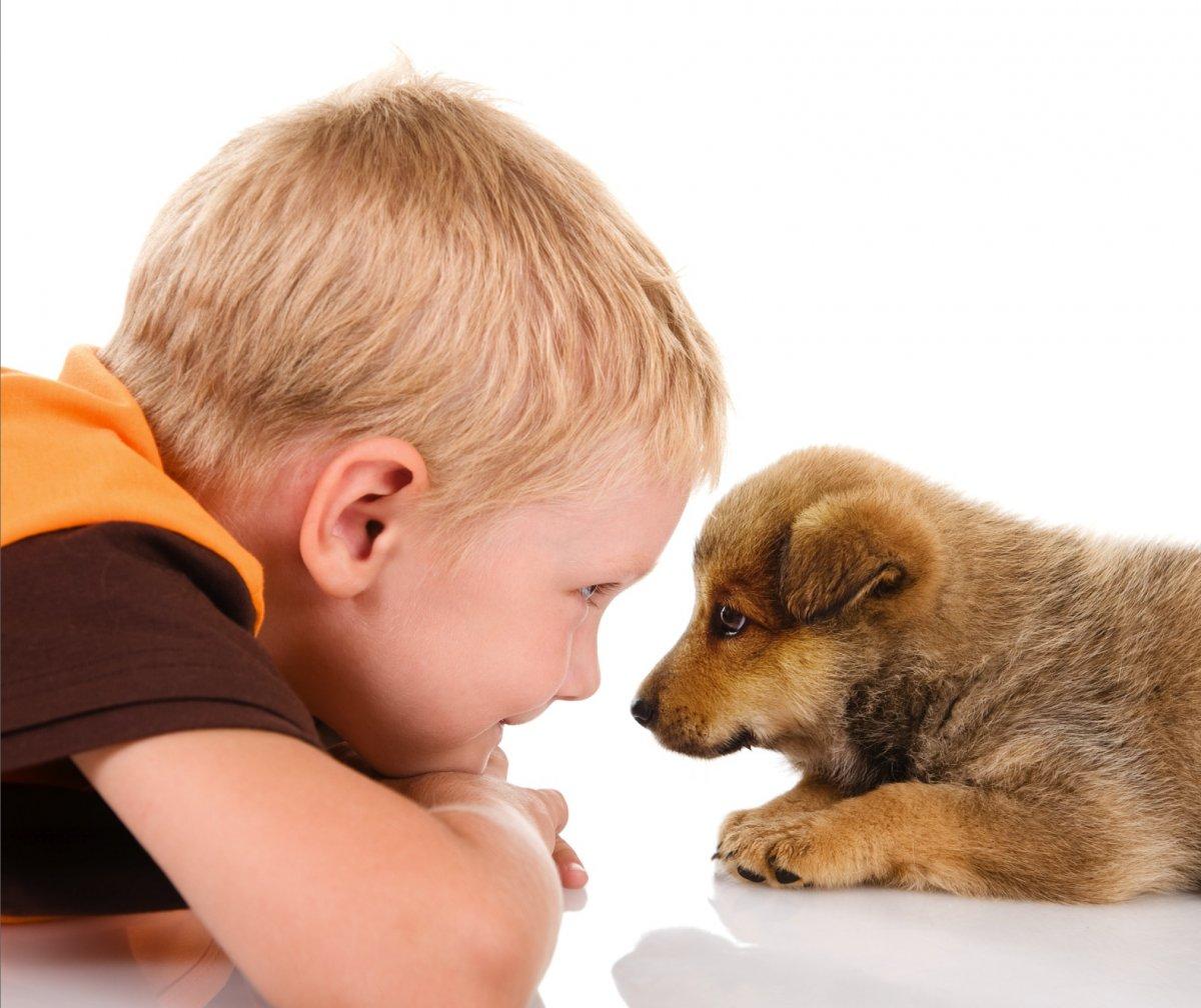 Домашние животные для детей дошкольного возраста: кого выбрать для знакомства?