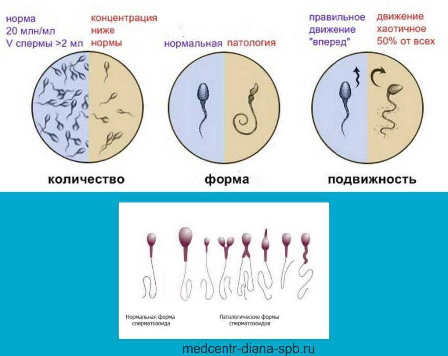 Появление крови в сперме – повод для беспокойства или вариант нормы? | симптомы и лечение урогенитальных заболеваний – noprost.ru