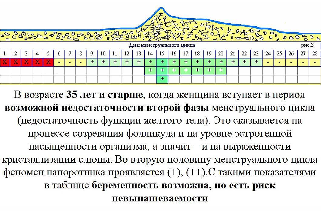 Калькулятор овуляции - рассчитать калькулятор овуляции и зачатия онлайн