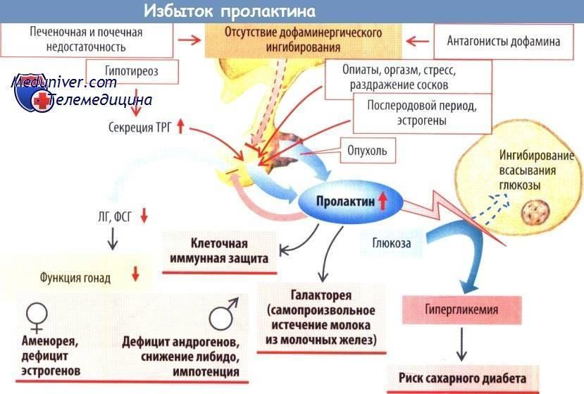 Пролактин повышен у женщины, причины, симптомы, заболевания