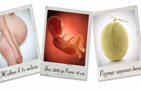 Ребенок на 31 неделе беременности (15 фото): развитие плода, вес норма, происходит с малышом, как выглядит