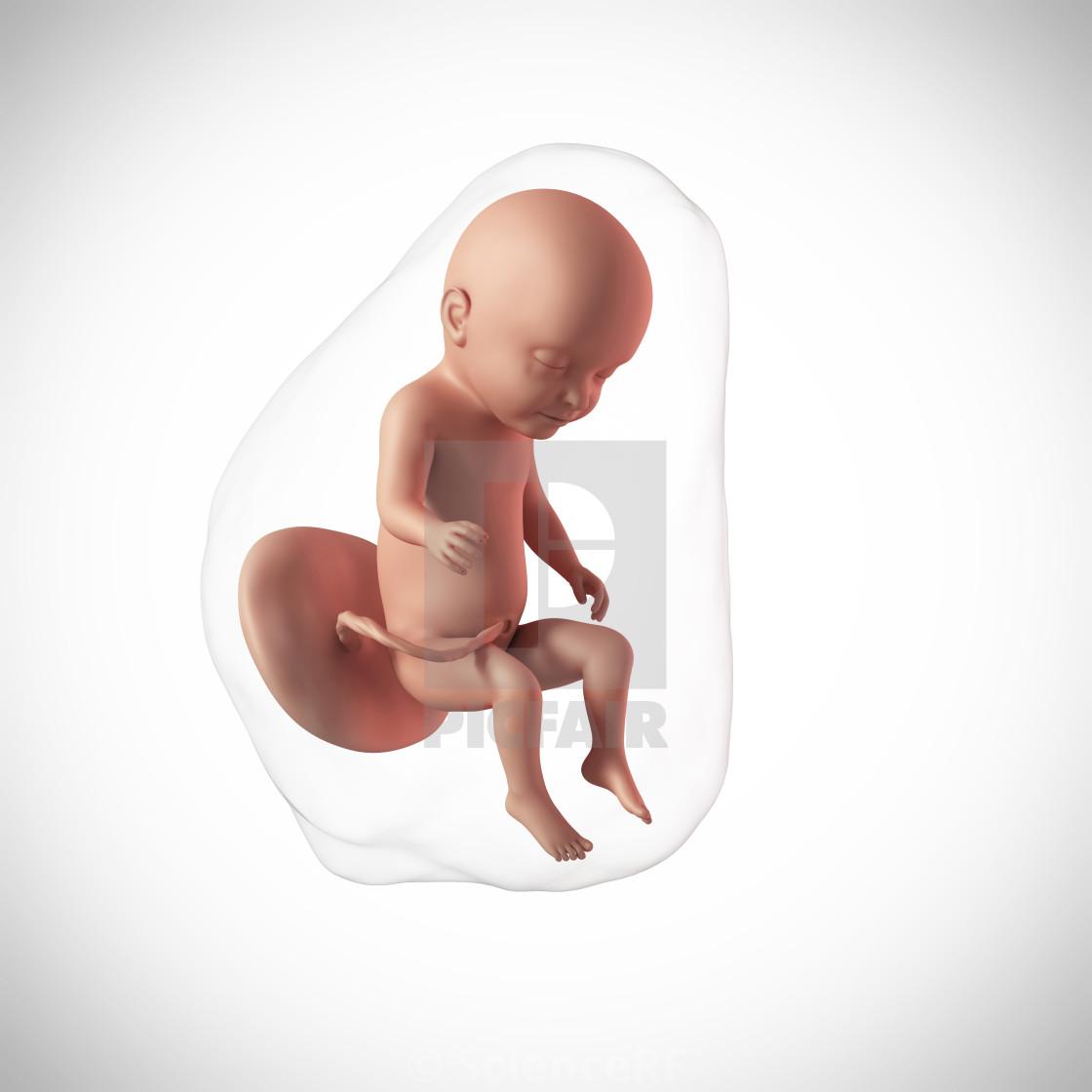 31 неделя беременности: что происходит с малышом и мамой