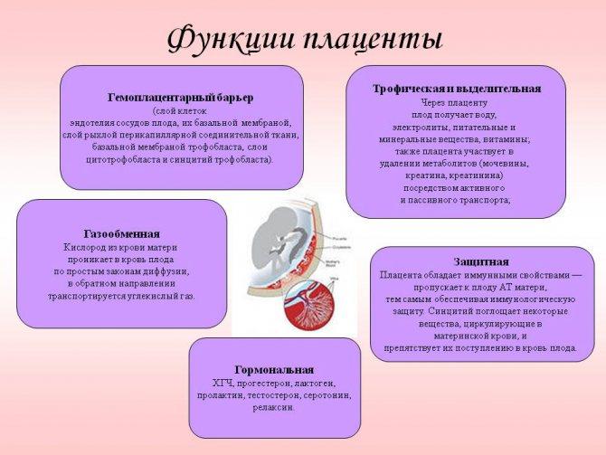 Плацента: строение, развитие, функции и диагностика