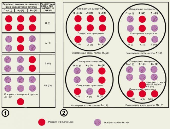 Анализ на резус фактор плода по крови матери