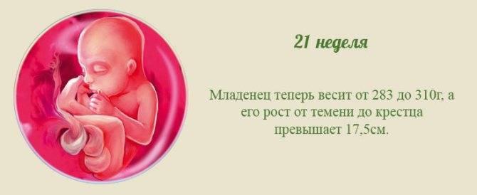 Развитие плода на 27 неделе беременности