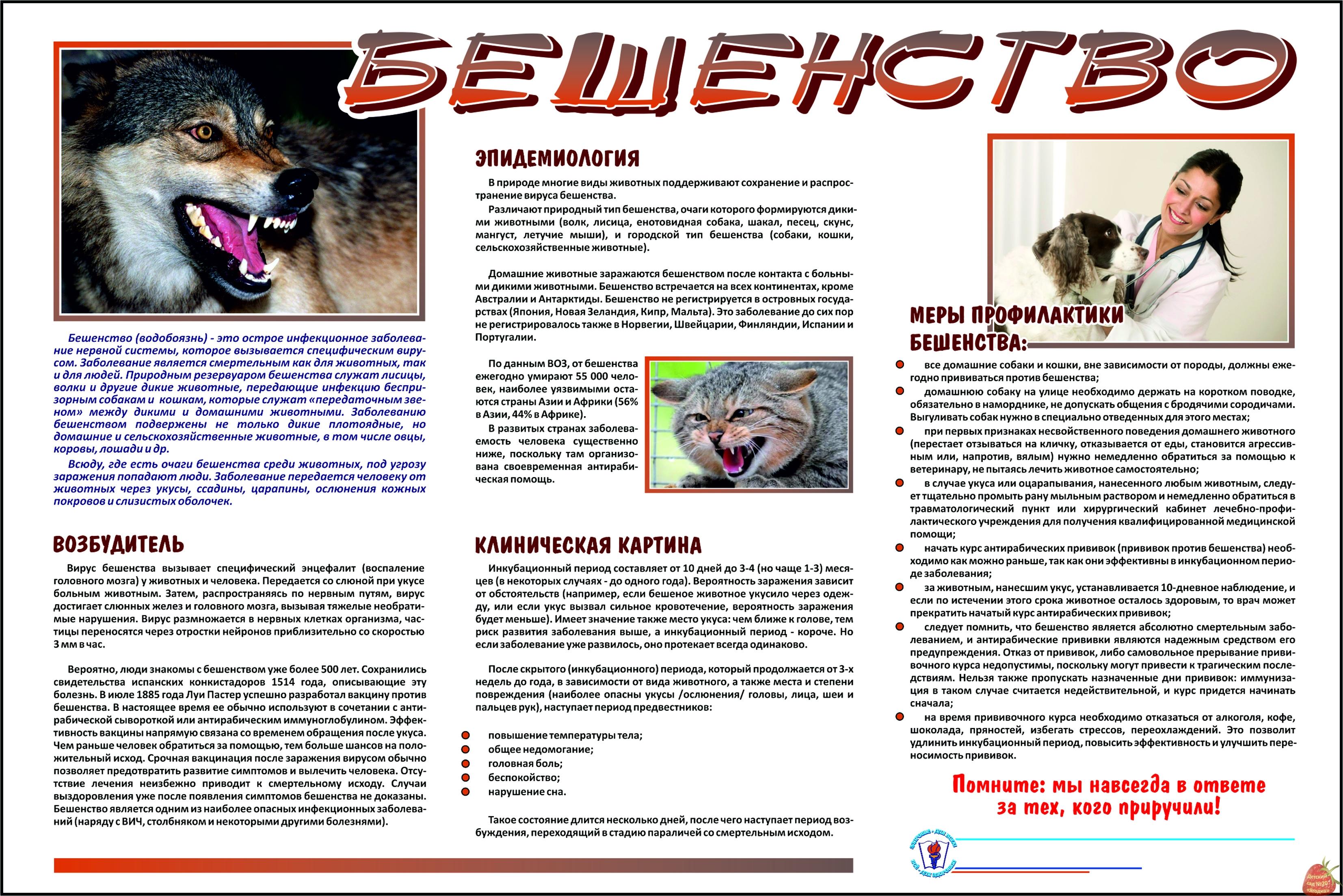 Первая помощь при укусах собаки — как ничего не упустить