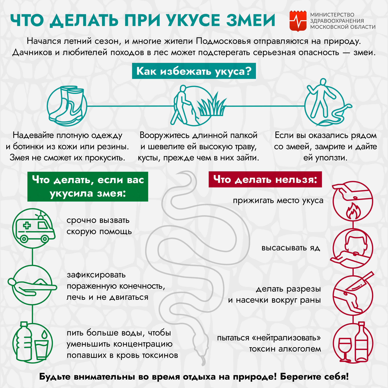 Укус змеи: правила оказания первой помощи, опасные последствия
