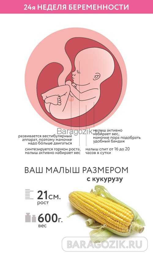 24 неделя беременности: что происходит – календарь