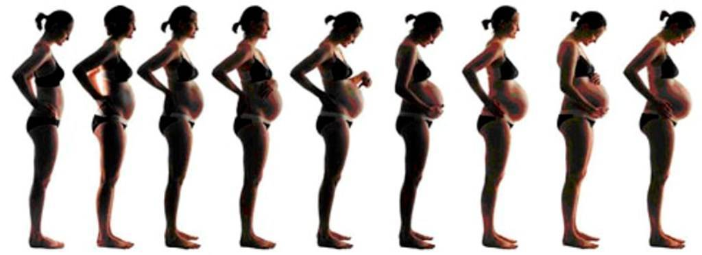 На какой неделе беременности начинает расти живот: советы специалистов для будущих мам