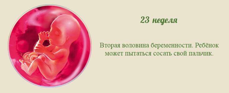 24 - двадцать четвертая неделя беременности: размер плода, ощущения и возможные осложнения