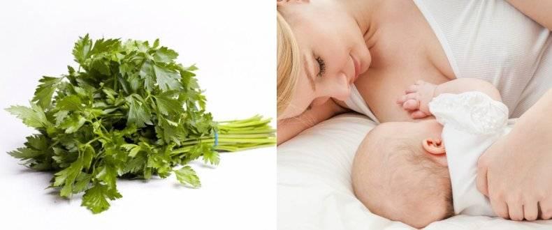 Какую зелень можно кормящей маме