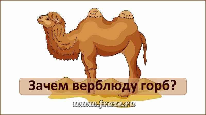 Зачем верблюду горбы? чем питается верблюд? сколько верблюд может жить без воды : labuda.blog зачем верблюду горбы? чем питается верблюд? сколько верблюд может жить без воды — «лабуда» информационно-развлекательный интернет журнал