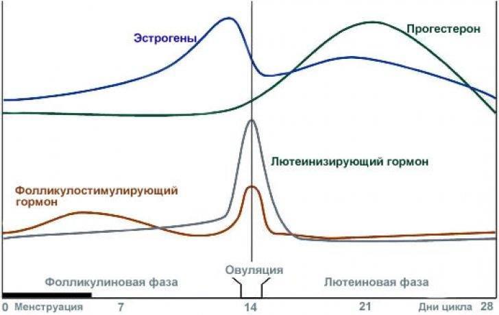 Пролактин и прогестерон связь, ответы врачей, консультация