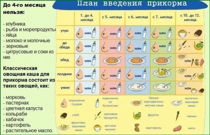 Прикорм: как и когда вводить, схема и таблица ввода прикорма ребенку по дням и месяцам / mama66.ru