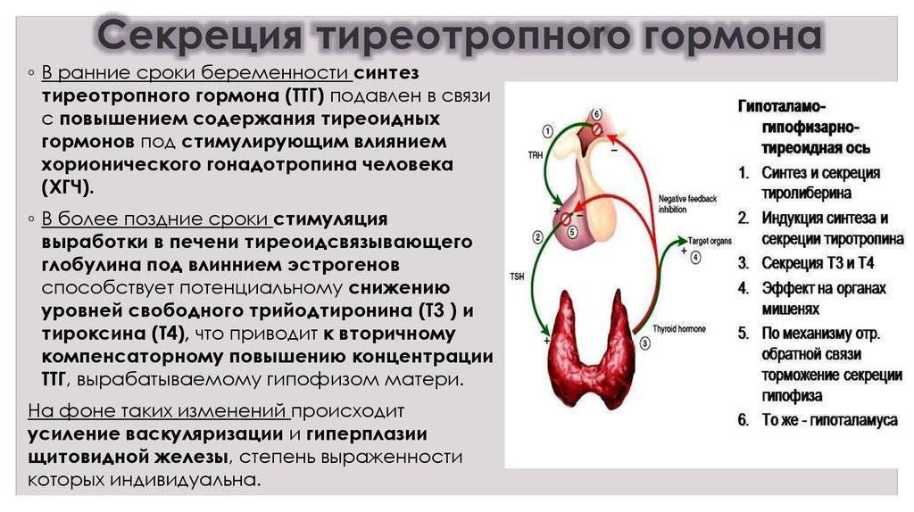 Ттг и пролактин: взаимосвязь в женском организме, причины повышения и понижения