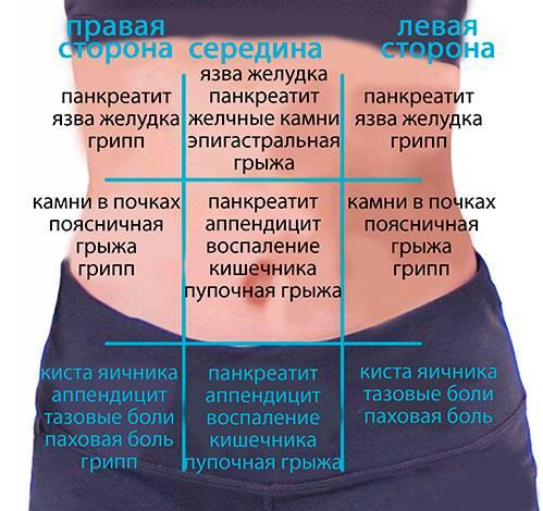 Расположение кишечника при беременности фото