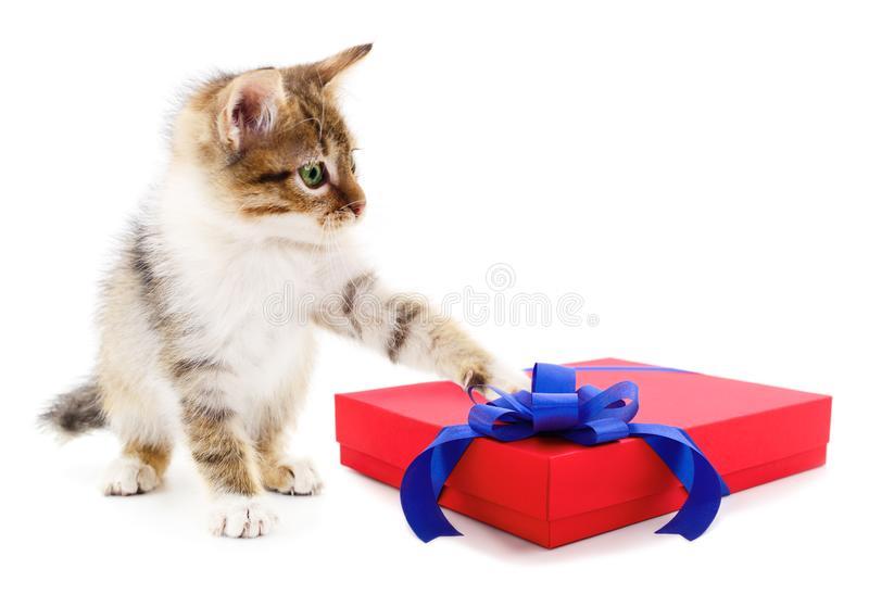 Как оригинально подарить котенка: полезные советы