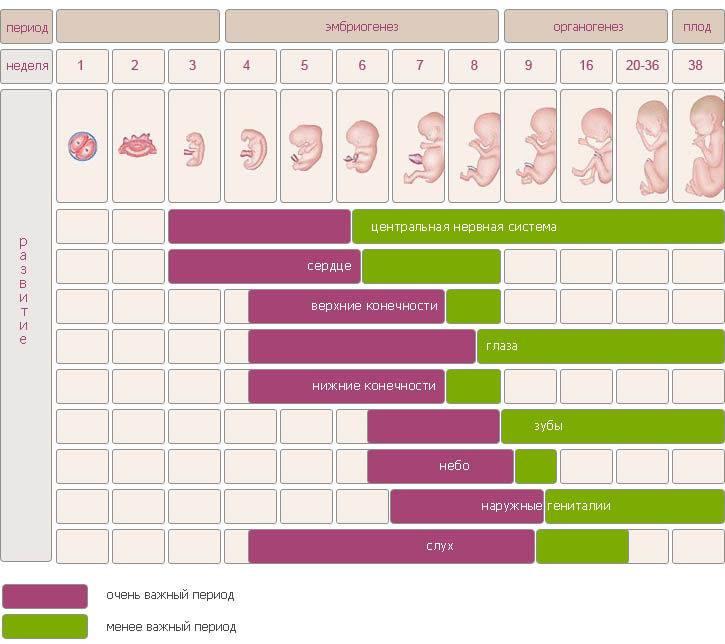 Как рассчитать срок беременности: 5 способов и их сравнение | курсы и тренинги от лары серебрянской