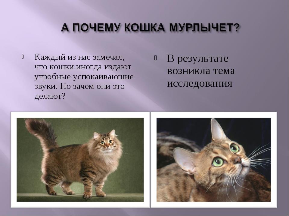 Почему коты и кошки мурлыкают? - hi-news.ru