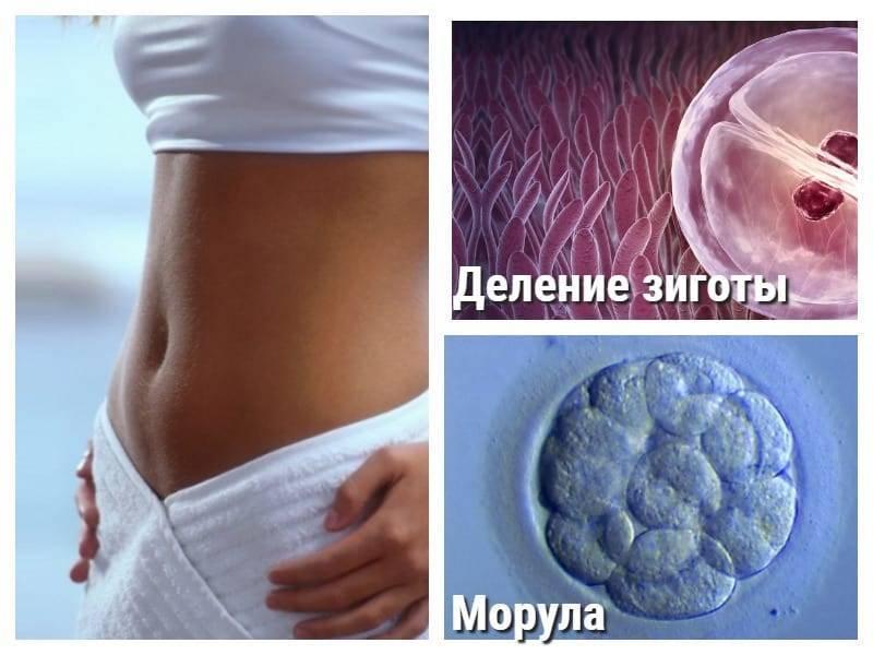 Узи на 4 неделе беременности