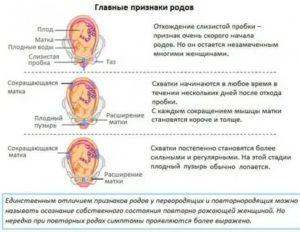 Как начинаются схватки у повторнородящих: ощущения и периодичность перед родами, предвестники, сколько длятся по времени, как правильно считать схватки при повторных родах