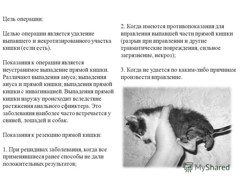 Выпадение прямой кишки у детей: причины, симптомы с фото, диагностика и лечение, терапия травами - добрый доктор