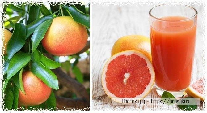 Грейпфрут во время беременности — польза и вред